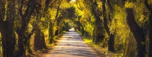 Autumn or fall, tree straight road on sunset.